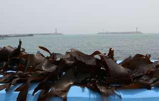 7 beneficii ale algelor Kelp. De ce ar trebui să o consumi