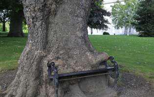 ce pot înghiți copacii