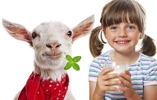 laptele de capră sau laptele de vacă