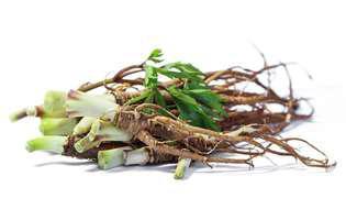 Tratamente naturale care te ajută în perioada de premenopauză: dong quai