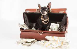 cele mai bogate animale din lume
