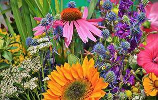12 beneficii de sănătate ale plantei de echinaceea pentru copii