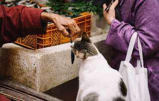 Pisicile și mâncarea de câini. De ce tip de hrană are nevoie o felină
