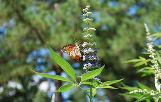 5 ceaiuri din plante care ajută la apariția menstruației