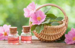 Plante diuretice și depurative: Măceșul. Flori și tinctură de măceș într-un coșuleț