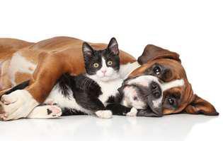 ce înseamnă să ai pisică și câine