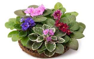 plante ușor de înmulțit în apă