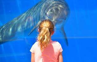 26 de lucruri amuzante pentru copii despre animalele marine