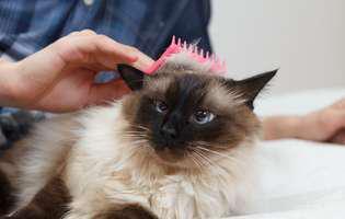 sfaturi utile despre pisici