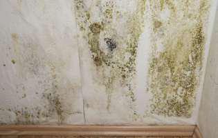 Mucegai și umiditate
