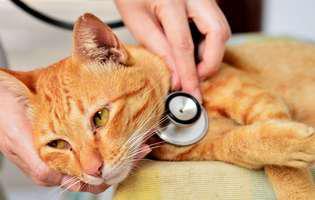semne de cancer la animalul tău de companie