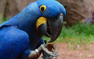 Ce trebuie să faci dacă vrei ca papagalul să vorbească
