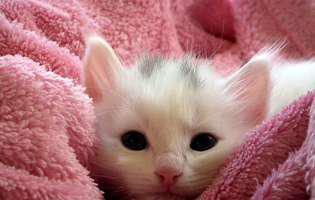 Anemia la pisici - cum identifici și cum tratezi anemia felină