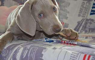Cum înveți câinele să nu mai muște. Sfaturi să-l dezveți de acest obicei