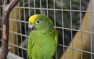 Ai primit cadou o pasăre în colivie? Iată cum o îngrijești