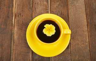 plante care te feresc de răceli: ceai de ciuboțica-cucului