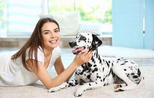 5 rase de câini potrivite pentru persoanele singure
