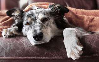 cum tratezi câinele bolnav de râie