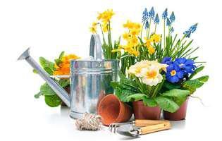 ce faci cu florile de primăvară la ghivece primite de 8 martie