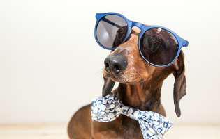 comportamentul ciudat al câinilor