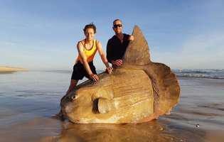 aratare esuata pe o plaja din Australia