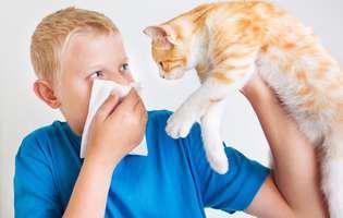 Top 4 rase de pisici recomandate pentru persoanele alergice