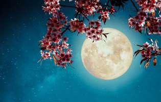 Luna plină din Scorpion sau luna florilor