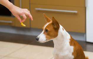 Top 8 mirosuri pe care le urăsc toți câinii