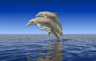 Curiozități uimitoare despre inteligența delfinilor