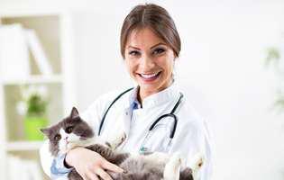 Conjunctivita la pisici, o afecțiune frecventă vara
