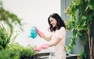 Cum să uzi florile folosind paie din plastic atunci când pleci în concediu