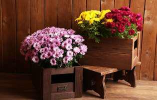 flori de toamnă parfumate