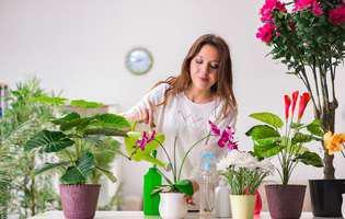 Fertilizatorii pentru orhidee. Ce conțin și cum se folosesc