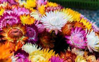 Buchețelele din flori uscate, aranjamente simple pentru sezonul rece