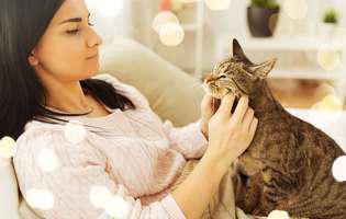 Pisicile se atașează de stăpânii lor la fel de mult precum copiii! Iată cum au descoperit cercetătorii