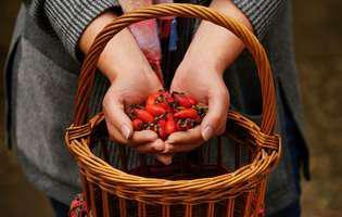 Plante medicinale indicate în anotimpul ploios: Măceșul, vitaminizant