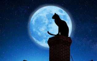 Cele mai haioase superstiții despre pisici. Unele ar putea fi adevărate!