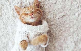superstiții internaționale despre pisici