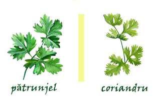 Alimente pe care le confundăm. Coriandru sau pătrunjel? Află cum să le deosebești