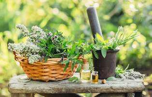 Tratamente naturale pentru demență senilă: Salvia