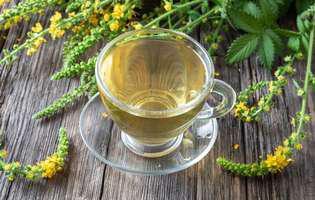 Plante cu efect antiviral și antibacterian Turița-mare (Agrimonia eupatoria)