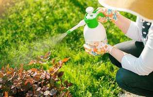 Dăunătorii din grădină. Soluții eficiente împotriva dăunătorilor din grădină
