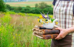 Culege și tu cele mai bune plante medicinale ale verii