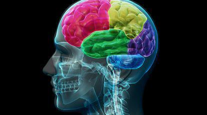 Dacă reușești să faci acest test de anatomie ai un IQ de geniu