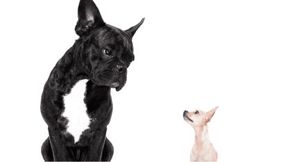 Câinele și cățelul - Grigore Alexandrescu