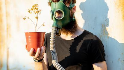 plante de apartament toxice
