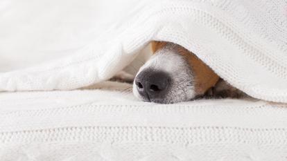 câinii pot mirosi oamenii răi