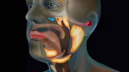 Un nou pas în medicină: oamenii de știință au descoperit un nou organ în corpul uman