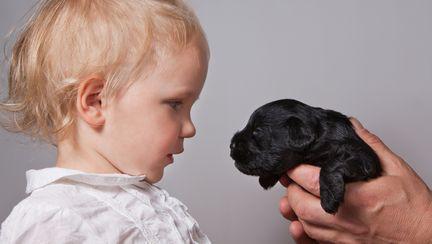 Învață copilul cum să se comporte cu un câine