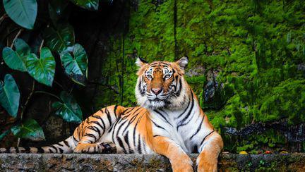 Animale pe cale de dispariție, din România și din lume